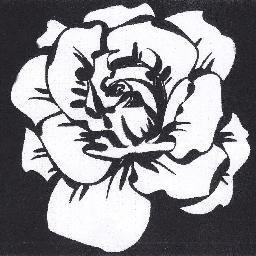 Weiße Rose Ns