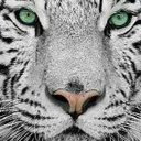 Tigrerp Extreme (@000_ruan) Twitter