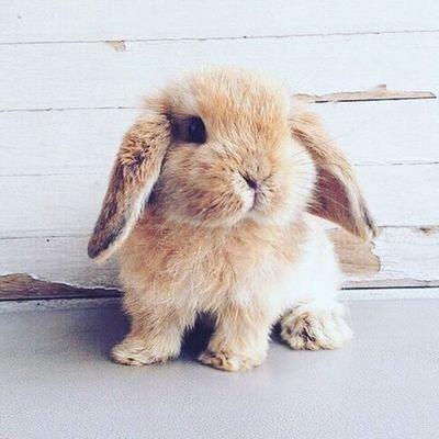 Süße Tiere Bilder