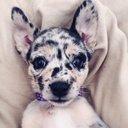Photo of CuteDogPlcs's Twitter profile avatar