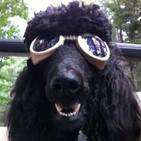 ThunderPoodle