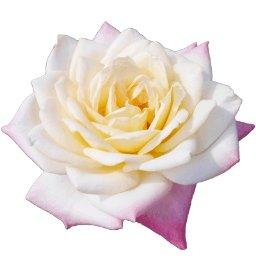 Kukka 夏の花 の ハス に 蓮の写真を4枚追加しました T Co N19mbqqq4i フリー写真 素材 蓮 はす 花 商用ok