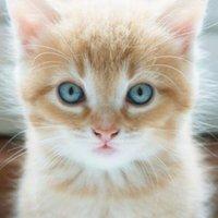 Meow Moe