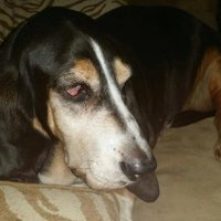Gerri Peterson-Holley ( @DogsRescuedGP71 ) Twitter Profile