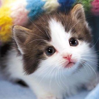 可愛い猫ちゃん画像集