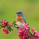 Georgia Bluebird (@196366nbh1) Twitter