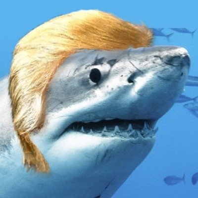 Image result for trump shark