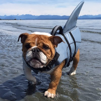 Georgia Bulldog On Twitter Please Post Pics Of Your New Hotel Dog