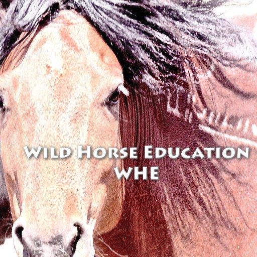 Wild Horse Education