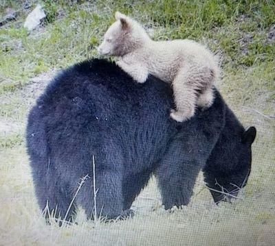 BearOfWhite (@LmtSue )