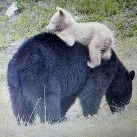 BearOfWhite (@LmtSue) Twitter profile photo