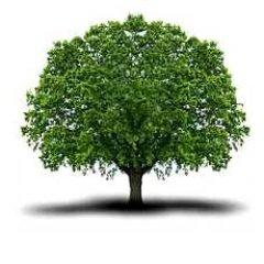 Sauvons les arbres sauvonsarbres twitter for Alberi ornamentali sempreverdi