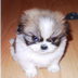 Dog fluffy destroyer of worlds reasonably small