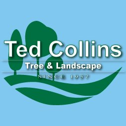 Ted Collins T L