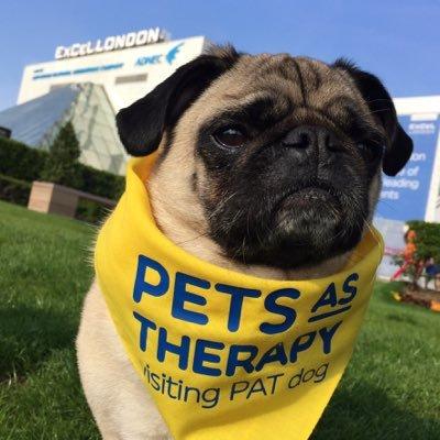 Doug Pug Therapy Dog