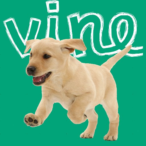 Cute Animal Vines