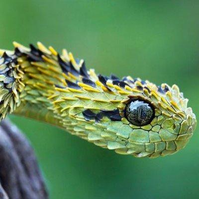 Animales ex ticos mianimalx twitter for Imagenes de jardines exoticos