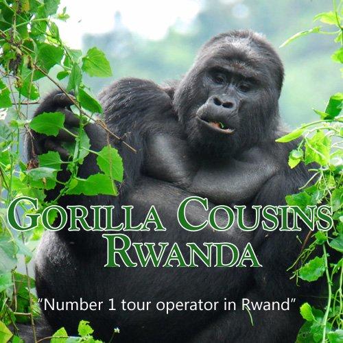 Gorilla Cousins