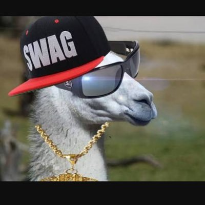 Image result for awesome llama