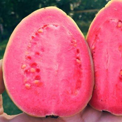 The Wild Guava LLC on Twitter: