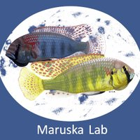 Maruska Lab