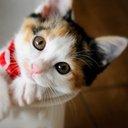 まこ♥子猫大好き@相互フォロー (@001Komokomoji) Twitter