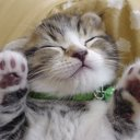 まこ♥ネコ大好き魔人@相互フォロー (@006Komokomoji) Twitter