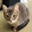 まこ♥ネコ好きの放浪記@相互フォロー (@009Komokomoji) Twitter