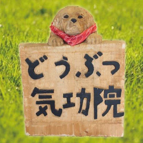 動物のための気功治療「どうぶつ気功院」