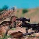 Assassin Squirrel (@11Wut) Twitter