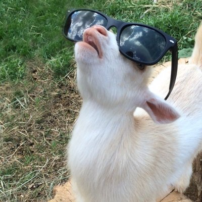_4CpiqnH_400x400 cool baby goat on twitter \