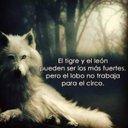 Gerardo Hernandez (@13gerrancho) Twitter