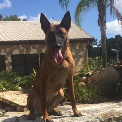 Puptown Houston Dog Training