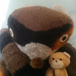Olmy Raccoon and Pet (@OlmyCoon) Twitter profile photo