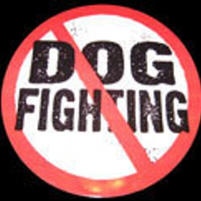 Stop dog fights