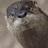 ruffhog