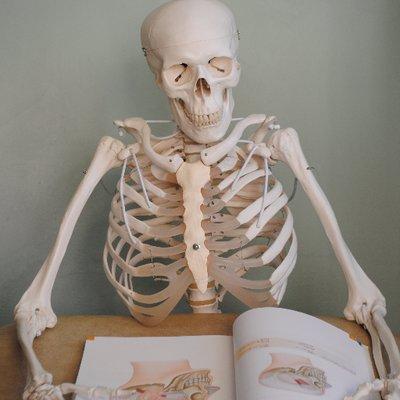 Learn Anatomy (@learnanatomyuk)   Twitter