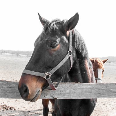 Horse Photo RTG (@HorsePhotoRTG) Twitter profile photo