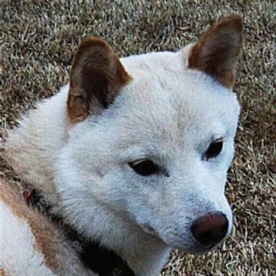 Kiko dog on Twitter: