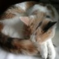 Sasha Fox