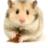 Hamster Fart (@hamsterfart) Twitter profile photo