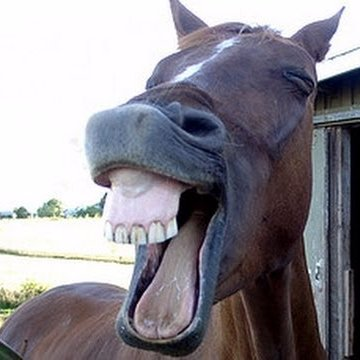 Image result for horse laugh