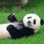かわいいパンダ画像bot @sa59em