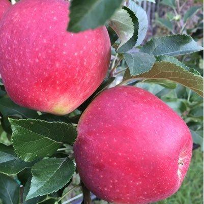 Apple & Berry