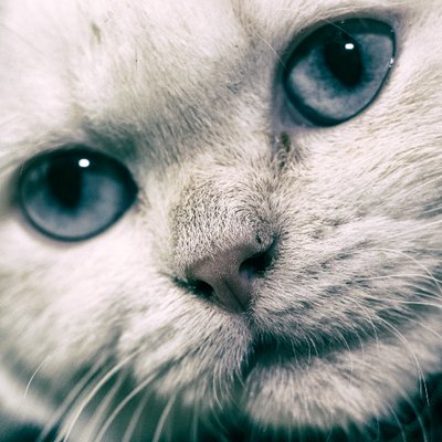 Cats Photo RTG (@CatsPhotoRTG) Twitter profile photo
