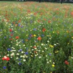 Hackney Gardeners