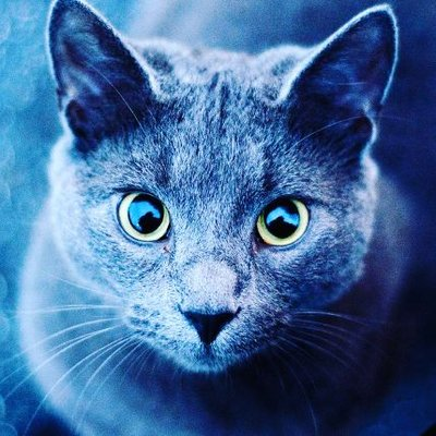 El Gato Azul (@El_Gato_Azul_) | Twitter