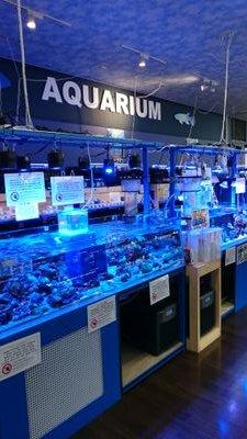 アミーゴ宇品店海水コーナー