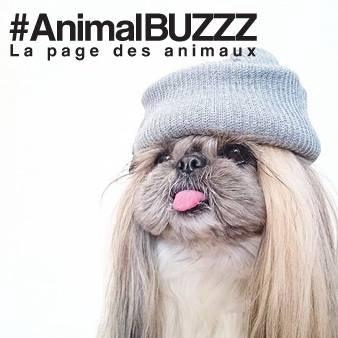 Animal Buzzz