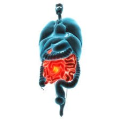 Leaky Gut Facts